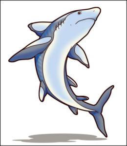 2.7 Tiburon