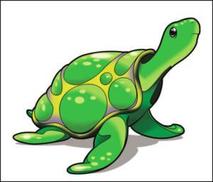 6.3 Tortuga