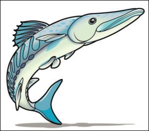 9.6 Barracuda